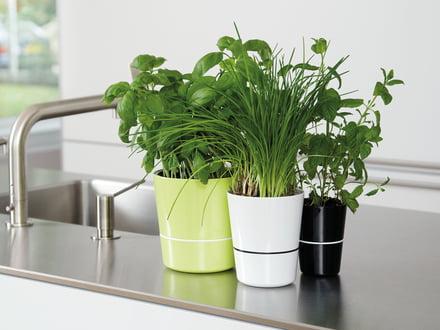 Le pot à herbes hydro - un petit auto-irrigant