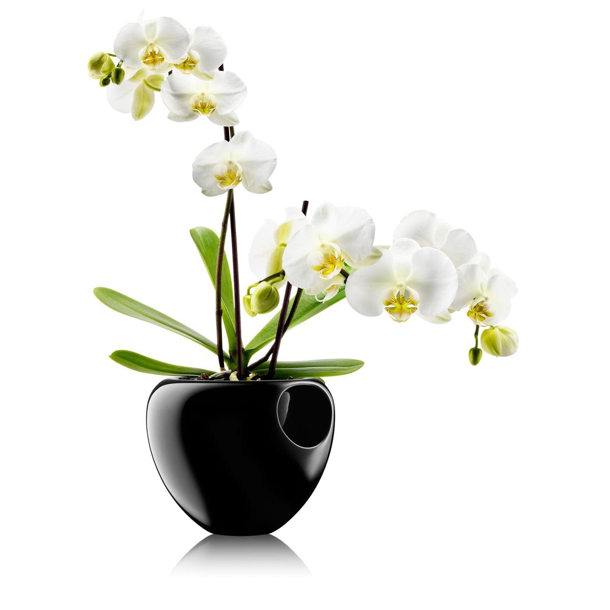 Pot orchid e par eva solo connox - Arrosage orchidee en pot ...