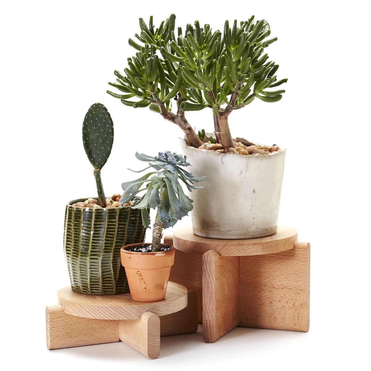 podium set pour plantes dans la boutique. Black Bedroom Furniture Sets. Home Design Ideas