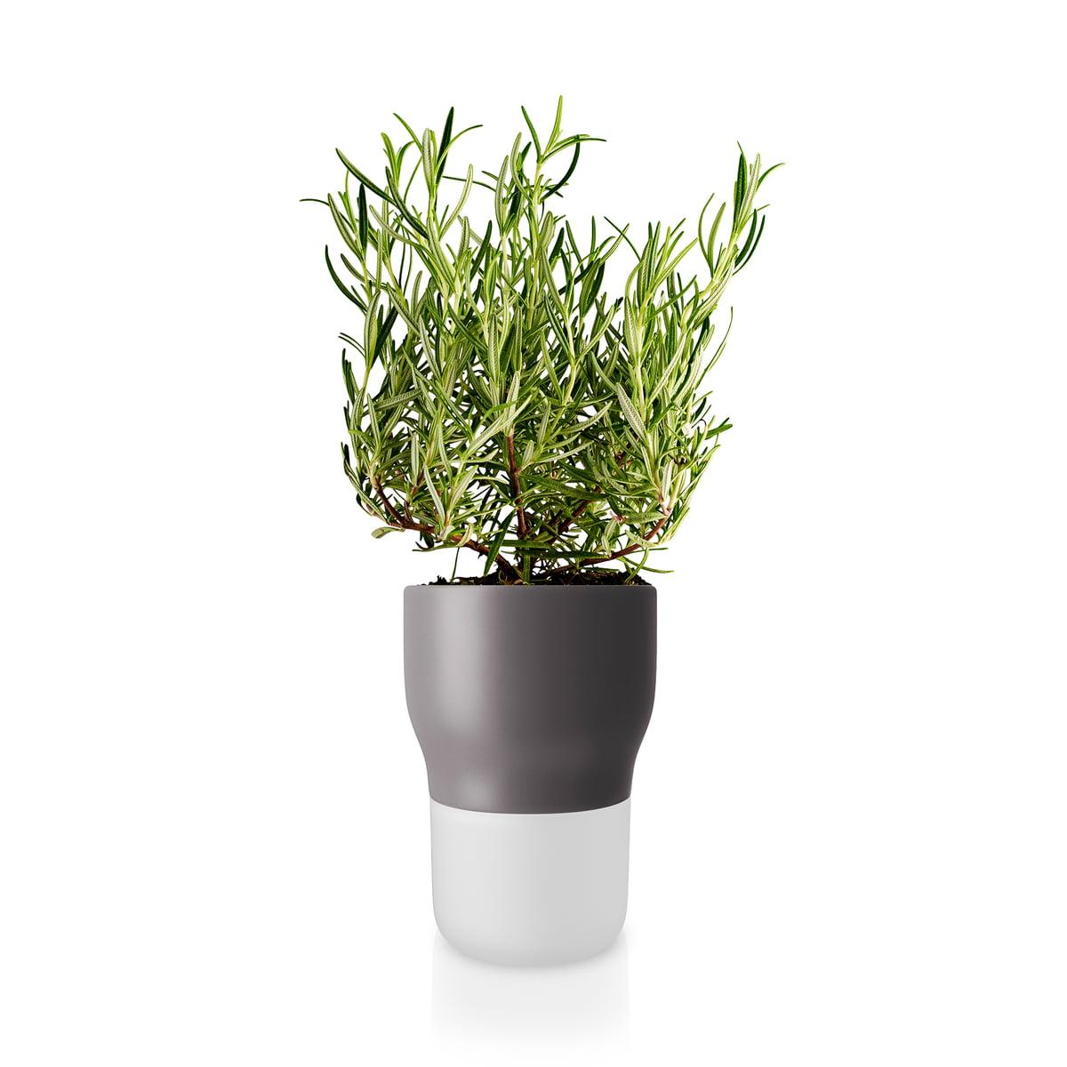 Arrosage Pour Plantes En Pot eva solo - pot à herbes aromatiques d'arrosage automatique, Ø 9 cm / blanc  chaux