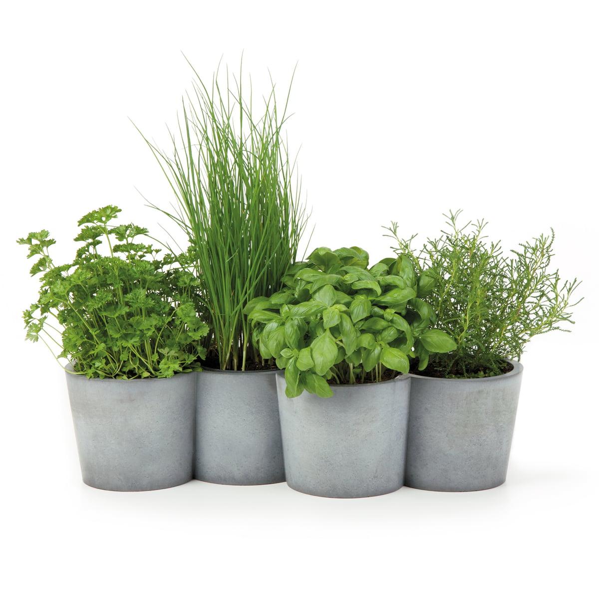 Herbes Aromatiques D Intérieur konstantin slawinski - pots à herbes aromatiques potpot sl46