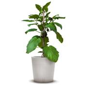 urbanature - Trolley à fleurs et plantes