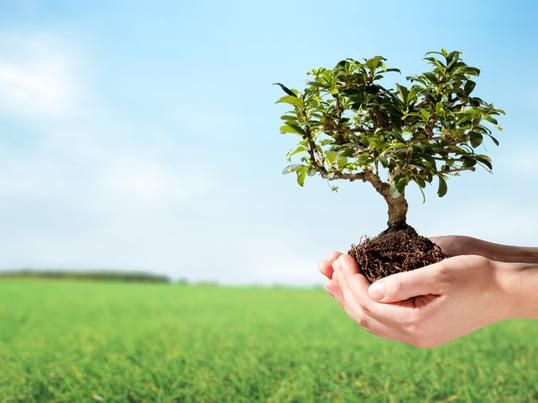 Écologie et développement durable 4 sur 3
