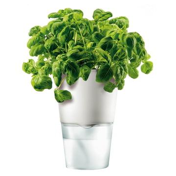 Pot de fleur à réserve d'eau