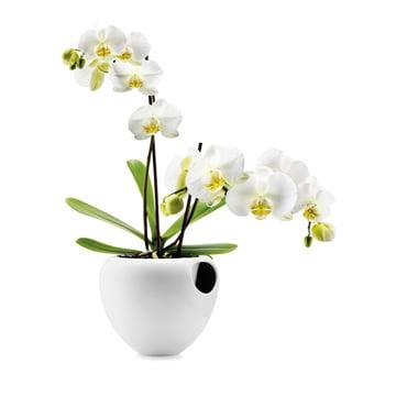 Eva Solo - Pot à orchidée