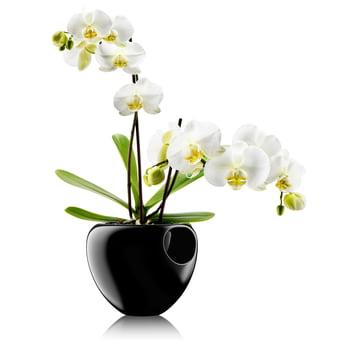 Eva Solo - Pot à orchidées, noir