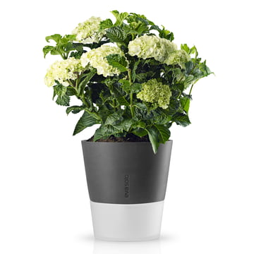 Eva Solo - Pot de fleur Ø 25 cm, stone grey, avec fleurs