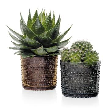 Kastehelmi boîte de rangement comme pot à fleurs