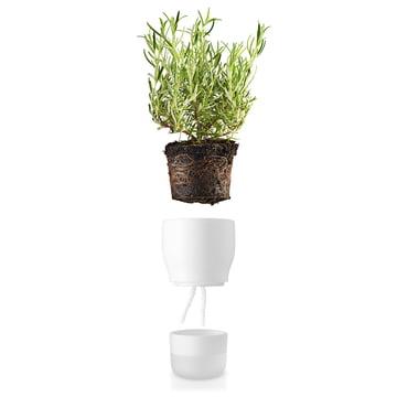Pot à herbes aromatiques d'arrosage automatique d'Eva Solo
