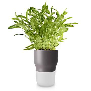Pot à herbes aromatiques d'arrosage automatique Ø 13 cm d'Eva Solo