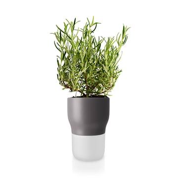 Pot à herbes aromatiques d'arrosage automatique Ø 11 cm d'Eva Solo