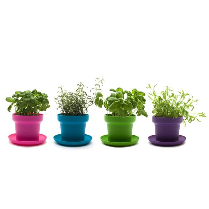Authentics - Pot de fleur Green, vert, turquoise, rose, lilas plantes