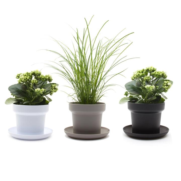 Authentics - Pot de fleur Green, blanc, gris, noir - plantes