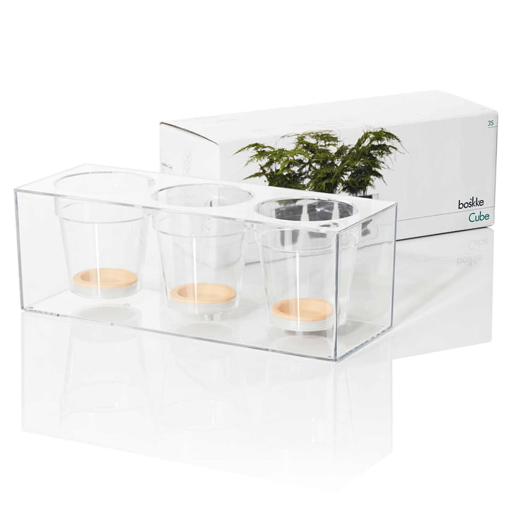 Boskke - Cube, transparent, triple - emballage