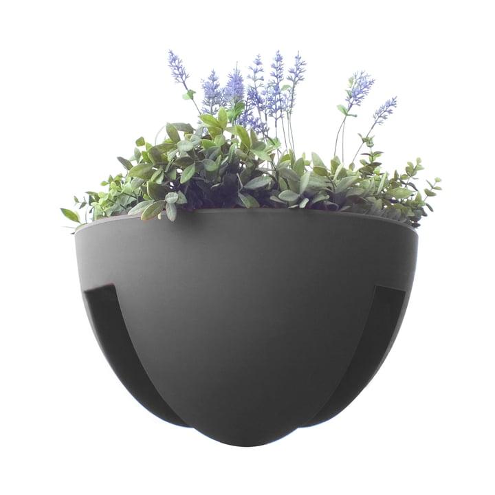 rephorm - Eckling Jardinière à plantes, graphite
