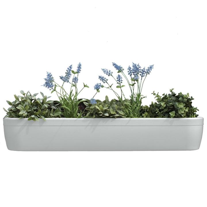 La jardinière pour rebord de fenêtre windowgreen de rephorm en blanc