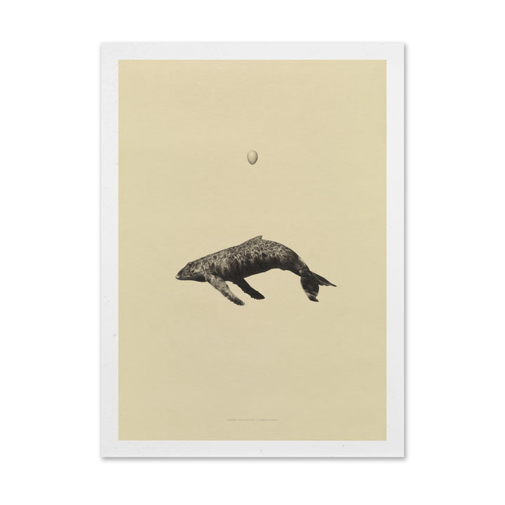 Paper Collective - Poster Whale Original