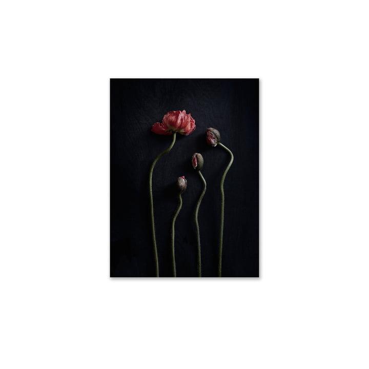 Paper Collective - Nature morte 02