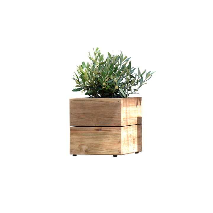 Bac à fleurs Minigarden en bois de teck naturel sans base de Jan Kurtz en petit modèle