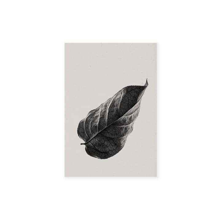 Sabi Leaf 01 30 x 40 cm de Paper Collective