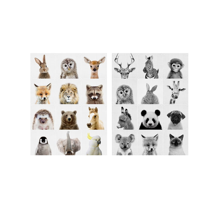Motif mural Animal Family par IXXI