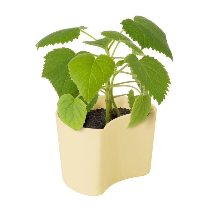 Votre pot de fleurs Arbre avec des graines de Rig-Tig by Stelton en jaune