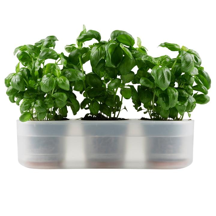 Till Planter Triple, transparent de Boskke