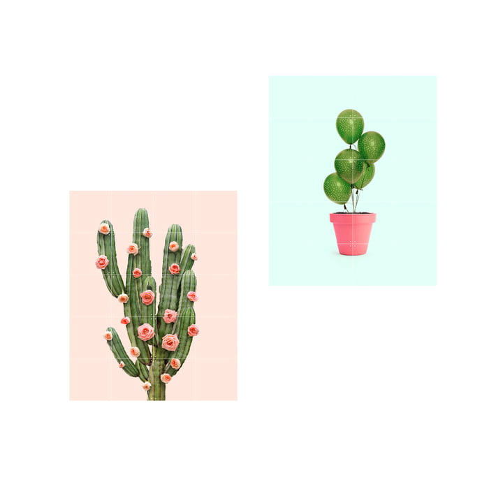 Affiche ballons et roses cactus, 80 x 100 cm par IXXI
