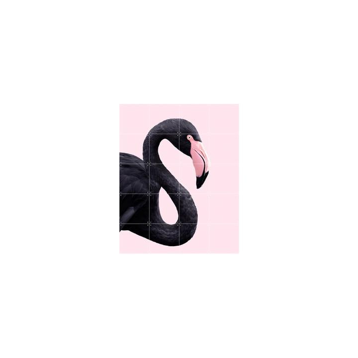 Affiche Black flamingo, 80 x 100 cm par IXXI
