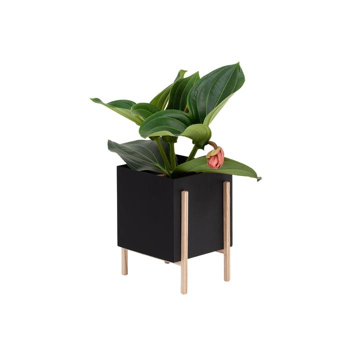 Le site Botanic Pot de Design House Stockholm , noir / nature
