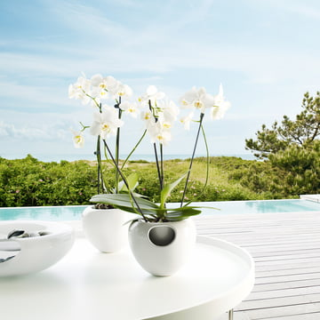 Eva Solo - Pot à orchidées avec plante
