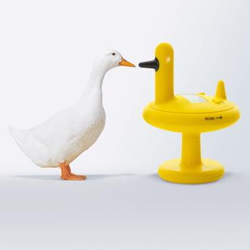 Alessi - Minuteur de cuisine Duck Timer, jaune - avec canard