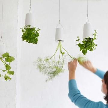 Boskke - Sky Planter Ceramic, jardin d'herbes aromatiques suspendu