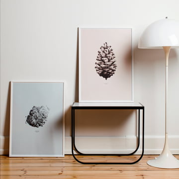 Paper Collective - Poster Nature 1:1 Pine Cone