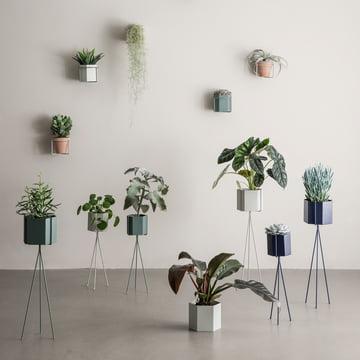 Tout pour les plantes et les fleurs de ferm Living