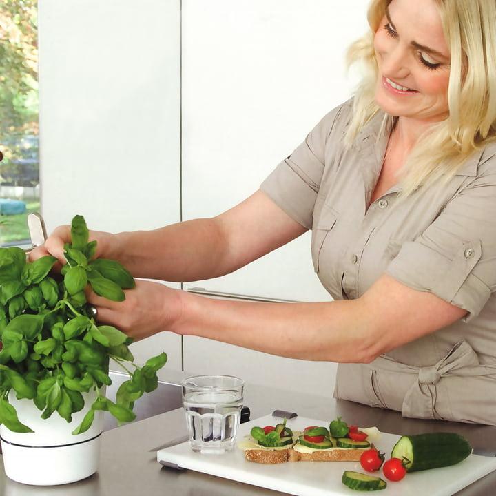 Rosti Mepal - Pot d'herbes Hydro - offre spéciale
