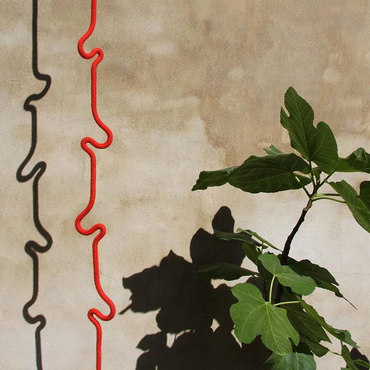Roberope, plante