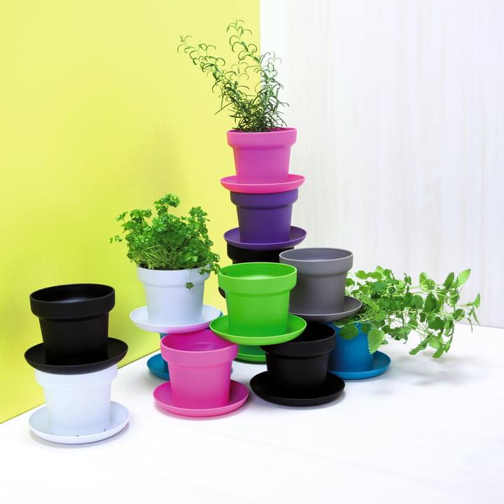 Authentics - Pot de fleur Green, couleurs - groupe