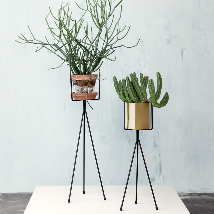 Plant Stand est disponible en deux tailles