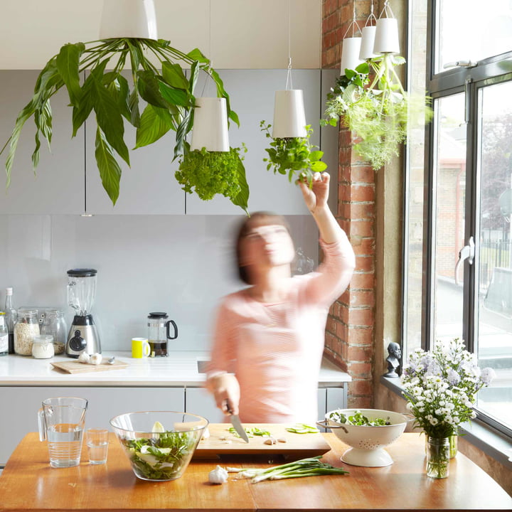 Jardin suspendu d'herbes aromatiques dans la cuisine