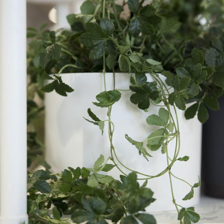Menu - Pot de fleurs Cylindrical